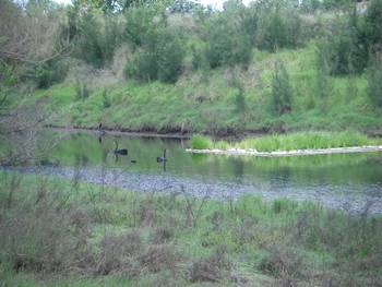 Bend hosted a reedbed biofilter trial on the anabranch in 2007.